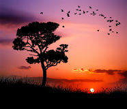 Beautiful nature sunset Royalty Free Stock Images