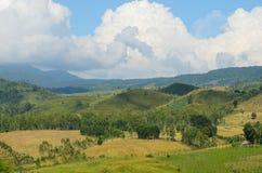 Beautiful  nature Royalty Free Stock Photo