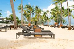 Beautiful nature tropical beach and sea with chair and coconut p stock image