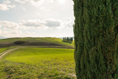 The beautiful nature of Tuscany. A glimpse of Val d'Orcia and of his famous cypresses, one of the most beautiful place in Tuscany Stock Photography