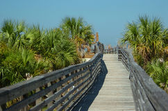 Beautiful nature view. Beautiful wooden way with palm trees to a nature park caladesi island in florida on a blue sky stock photography