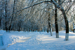 Beautiful nature, winter forest Stock Photos