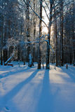 Beautiful nature, winter forest Royalty Free Stock Photos