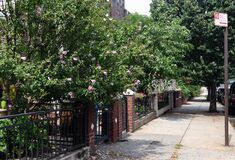 Free Beautiful Neighborhood Sidewalk With Plants And Flowers In Home Gardens In Astoria Queens New York During Summer Royalty Free Stock Photography - 210268327