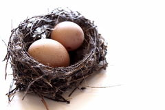 Beautiful nest Royalty Free Stock Photo