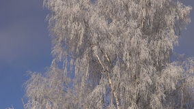 Beautiful new year christmas  time winter hoarfrost on birch tree stock footage