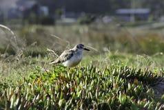 Beautiful New Zealand. A bird. Beautiful New Zealand. A bird on a sunny day Royalty Free Stock Photos