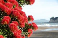 Free Beautiful New Zealand. Pohutakawa Royalty Free Stock Image - 81634366