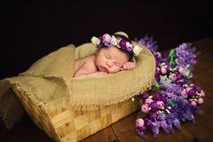 Beautiful newborn baby girl with a purple wreath sleeps in a wicker basket.  Royalty Free Stock Photos