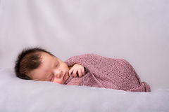 Beautiful newborn baby girl sleeping. Swaddled in a knit wrap Royalty Free Stock Image
