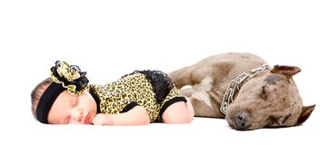 Beautiful newborn girl sleeping together with her dog a pit bull stock photos
