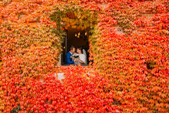 Beautiful newlywed couple kissing in window with red ivy stock images