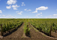 Beautiful Niagara Falls vineyard in the evening Royalty Free Stock Images