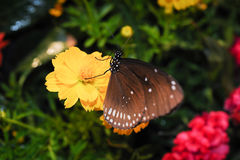 Beautiful night butterfly. Royalty Free Stock Images