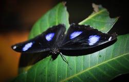 Beautiful night butterfly. Royalty Free Stock Photo
