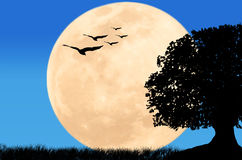 Beautiful night full moon at wild Royalty Free Stock Photos