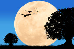 Beautiful night full moon at wild Royalty Free Stock Image