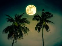 Beautiful night landscape of green sky with bright full moon over coconut palm. Serenity nature background. Outdoor at nighttime. The moon taken with my camera royalty free stock photography