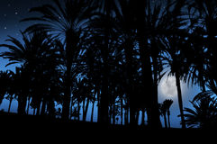 Beautiful night landscape with palms and the moon Stock Photography