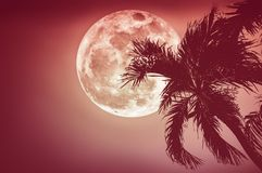 Beautiful night landscape of sky with supermoon behind betel pal Royalty Free Stock Photos