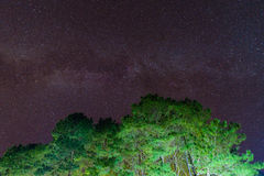 Beautiful night sky, the Milky Way and pine trees in upper view for background Stock Photography