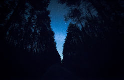 A beautiful night sky, the Milky Way and  trees Royalty Free Stock Photos