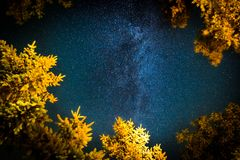 The Milky Way rises over the pine trees on a foreground royalty free stock images