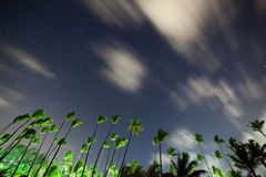 The beautiful night sky, stars and the palm trees Royalty Free Stock Image