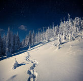 Beautiful night winter landscape in the mountain forest. With the stars in the dark sky Royalty Free Stock Images