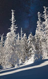 Beautiful night winter landscape in the mountain forest. With the stars in the dark sky Stock Images