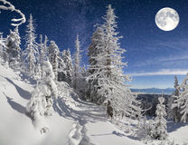 Beautiful night winter landscape in the mountain forest Royalty Free Stock Photo