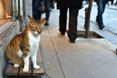 Beautiful Noble Cat Sitting and Looking People. At the street Royalty Free Stock Images
