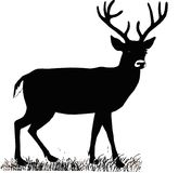 Beautiful noble proud sika deer are ruminant mammal in family Cervidae. Side view.