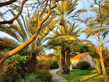 A Pathway to Paradise royalty free stock photography