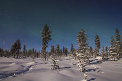Beautiful northern lights over forest and snow-covered tre Royalty Free Stock Photos