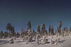 Beautiful northern lights over  forest and snow-covered tre Stock Images