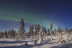 Beautiful northern lights over forest and snow-covered tre Royalty Free Stock Photography