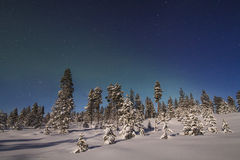 Beautiful northern lights over  forest and snow-covered tre Royalty Free Stock Image