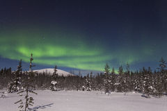 Beautiful northern lights over  forest and snow-covered tre Royalty Free Stock Photo