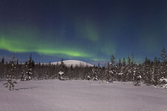 Beautiful northern lights over  forest and snow-covered tre Stock Photos