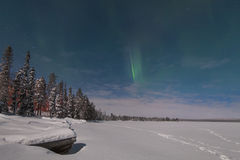 Beautiful northern lights over forest and snow-covered tre stock photography