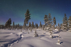 Beautiful northern lights over snowy forest Royalty Free Stock Photos