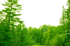Beautiful northern michigan forest Royalty Free Stock Image