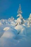 Beautiful Northern Nature - Winter Landscape Stock Image