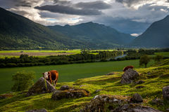 Beautiful Norwegian lanscape Stock Photo