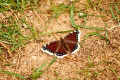 Beautiful butterly sitting on the ground Stock Photography
