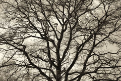 Beautiful oak against the sky Royalty Free Stock Images