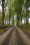 Beautiful oak lane through super green ancient oak forest. Green forest roof with brown sand road giving lots of perspective stock photography