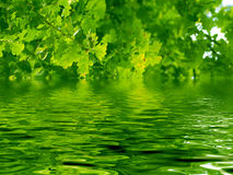 Beautiful oak tree and water Royalty Free Stock Images