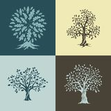 Beautiful oak trees silhouette Stock Photos